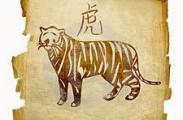 тигр год